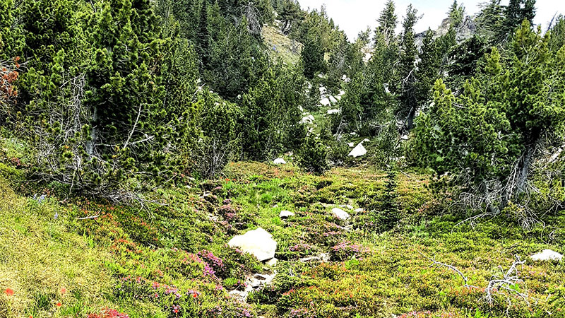 Seeing Green at Baldy MTN